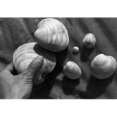 NY Sea Grant   NYSG: Hard Clam Research Initiative - About